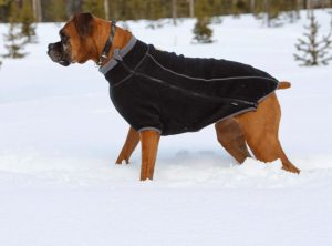 How to care for your pet during winter time